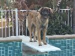 [Faraday exploring the diving board. She didn't jump.]